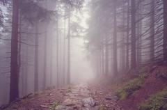 Fog in the haunted forest - stock photo