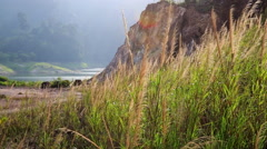 Wind in lush grass. Stock Footage