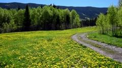 Young Couple Walks Through Mountain Meadow Stock Footage