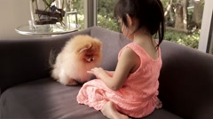 Little Girl Trains Her Dog, Pomeranian, by Giving Food with Her Hand. Stock Footage