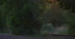 Green Trees Nearby Railway, Railroad, Black Bird Stock Footage