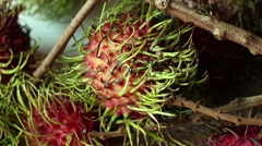 RAMBUTAN: Close Up Camera Dolly right across bunch of rambutan Stock Footage