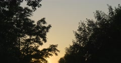 Yellow And Blue Sky, Sunset Reflection Behind The Trees' Silhouettes Stock Footage