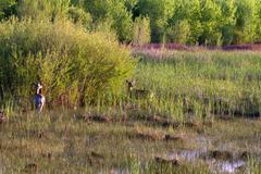 Bosque del Apache National Wildlife Refuge - stock photo