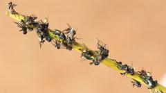 Fly Stuck On Sticky Trap Stock Footage