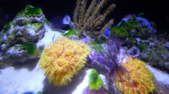 Colorful tropical corals Stock Footage