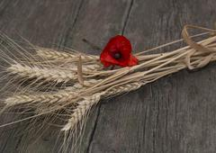 the linking of wheat decorated with a flower of red poppy - stock photo