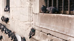 Pigeons on the wall of Yeni Cami (New Mosque) in Istanbul. Stock Footage