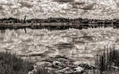 Florida Everglades Lake BW - stock photo