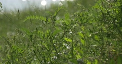 Flesh Lush Green Grass, Leaves on The River Bank Stock Footage