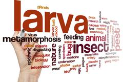 Larva word cloud - stock photo