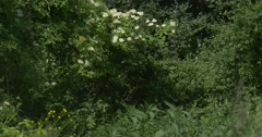 Wild Bush with White Flowers, Bushes, Yellow Flowers Stock Footage