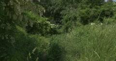 White Acacia, Flowers on The Tree, Bush, Lush Grass Stock Footage