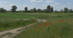 Dusty Road, Pathway Through Green Field, Red Poppies Stock Footage