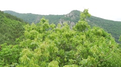 Aerial shot.movement along the crown of the trees and hills of the mountain Stock Footage