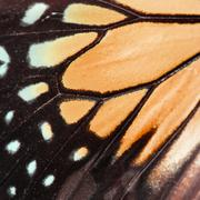orange butterfly wing - stock photo