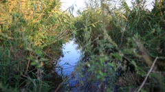 Stock Video Footage of Swampy  lake with mirror water level in mysterious forest, young tree Fresh