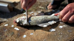 Fishing. Man angler cleaning preparing fish on the stump, outdoors. Cruelty to - stock footage