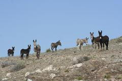Donkeys, Northern Cape, South Africa - stock photo