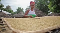 Food, Africa village woman spreading rice with crowing roster Stock Footage