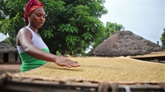Food, Africa village woman drying and spreading rice in traditional fashion Stock Footage
