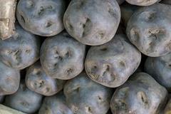 Potatoes in a Peru marketplace in Arequipa. - stock photo