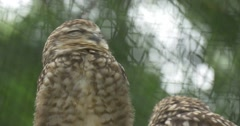 Two Little Owls Are Sitting in Front Of Cage Grate Stock Footage