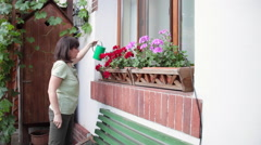 Woman watering flower blossoms by a window Stock Footage