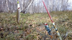 Pike lake fishing on spinning Stock Footage