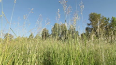 Dolly shot of green grass - stock footage