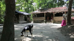 Scene of rural life. Indian village girl gives water to the goats. Stock Footage