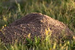 Excavated soil mole nature Stock Photos