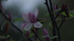 Flower tree after rain 1 Stock Footage