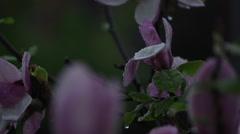 Flower tree after rain 3 Stock Footage