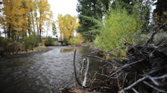 Scenic northwest river with aspens on bank Stock Footage