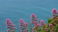 A beautiful cliff side view of South England Stock Footage