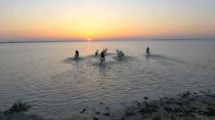 Aerial France sunset Drone Camargue horses equine sea - stock footage