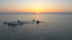 Aerial France Drone sunset Camargue white horse Stock Footage