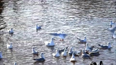 Ducks and gulls swimming in water with sunlight reflection Stock Footage