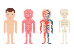 Human Body Anatomy - nude body, muscle, blood circle and sceleton, pixel art - stock illustration