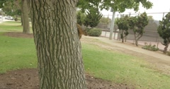 Squirrel on a tree Stock Footage