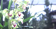 Beautiful Orchid flowers with bright sunshine on them 4k Stock Footage