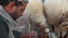Stock Video Footage of Biblical Re-enactment of Sheep and Shepherd