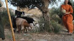 Biblical Re-enactment of Sheep and Shepherd - stock footage
