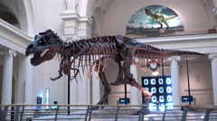Tyrannosaurus Rex dinosaur in lobby of Field Museum Chicago 4k Stock Footage