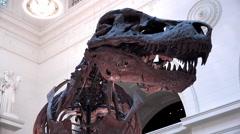 Tyrannosaurus Rex dinousaur skeleton pan shot 4k Stock Footage