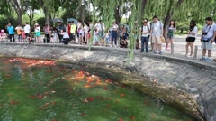 People are at the pond where swimming colored carp, Beijing World Park Stock Footage