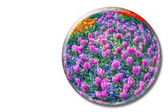 Crystal sphere with pink hyacinths on white background - stock photo