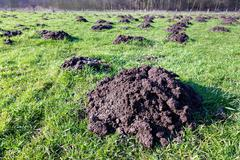 Many molehills in green grassland - stock photo