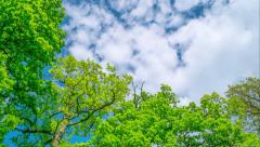 Spring oaks, time-lapse Stock Footage